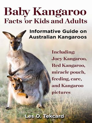 Baby Kangaroo Facts For Kids And Adults