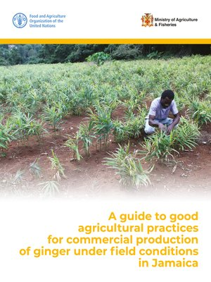cover image of A Guide to Good Agricultural Practices for Commercial Production of Ginger under Field Conditions in Jamaica