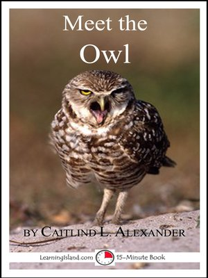 cover image of Meet the Owl