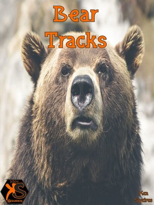 cover image of Bear Tracks
