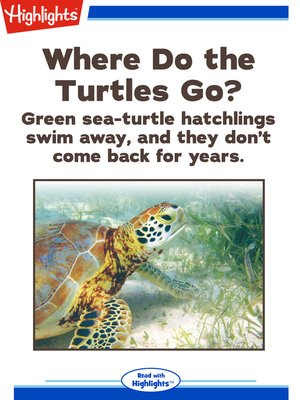 cover image of Where Do the Turtles Go?