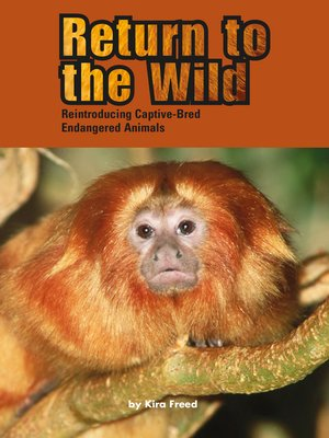 cover image of Return to the Wild: Reintroducing Captive-Bred Endangered Animals