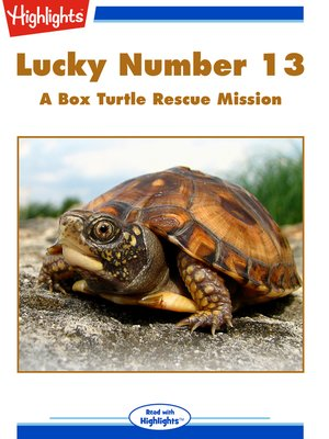cover image of Lucky Number 13