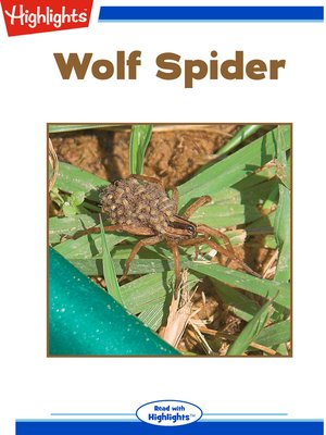 cover image of Wolf Spider