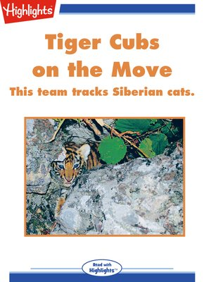 cover image of Tiger Cubs on the Move
