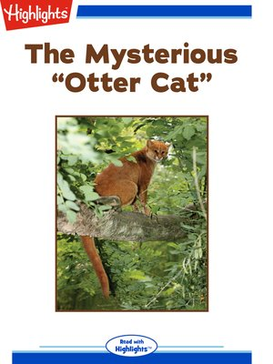 "cover image of The Mysterious ""Otter Cat"""