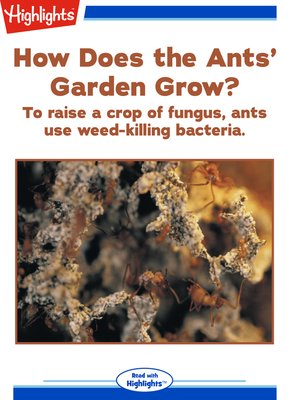cover image of How Does the Ants' Garden Grow?
