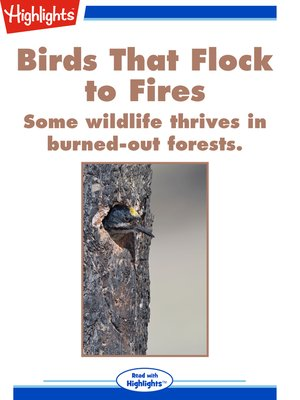 cover image of Birds That Flock to Fires