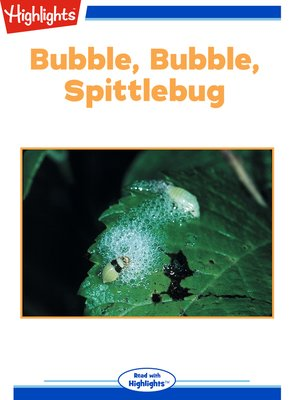 cover image of Bubble Bubble Spittlebug