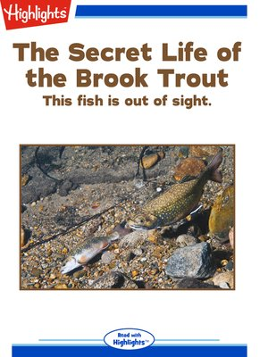 cover image of The Secret Life of the Brook Trout