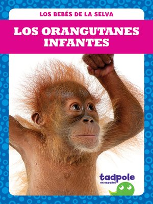 cover image of Los orangutanes infantes (Orangutan Infants)