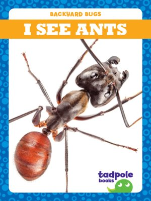 cover image of I See Ants