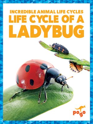 cover image of Life Cycle of a Ladybug