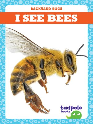 cover image of I See Bees