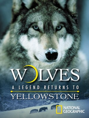cover image of Wolves: A Legend Returns to Yellowstone