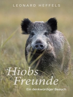 cover image of Hiobs Freunde