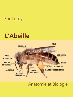 cover image of L'Abeille