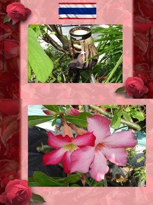 cover image of Thai Blumen und Pfanzen Photobuch von Heinz Duthel