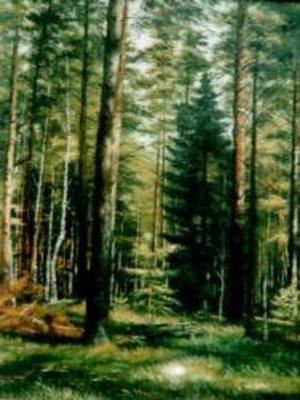 cover image of Лес – кормилец