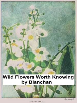 cover image of Wild Flowers Worth Knowing