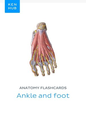 cover image of Anatomy flashcards