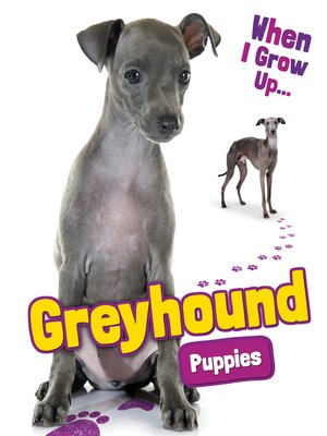 cover image of Greyhound Puppies