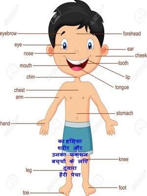 cover image of का हिस्सा शरीर और उनका फंक्शन बच्चों के लिए