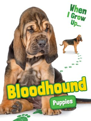 cover image of Bloodhound Puppies