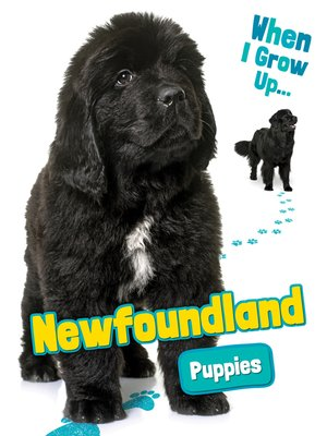 cover image of Newfoundland Puppies