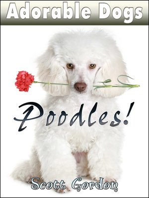 cover image of Poodles!