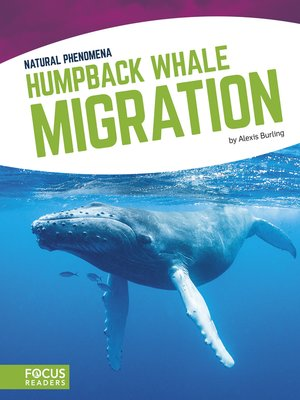 cover image of Humpback Whale Migration