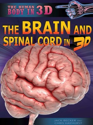 cover image of The Brain and Spinal Cord in 3D