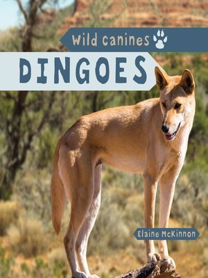 cover image of Dingoes