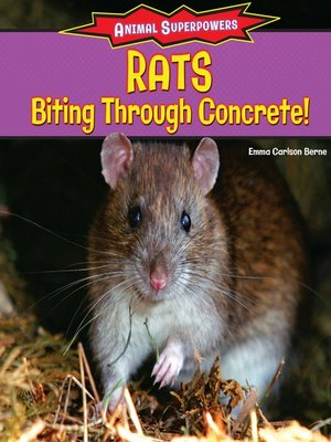 cover image of Rats: Biting Through Concrete!