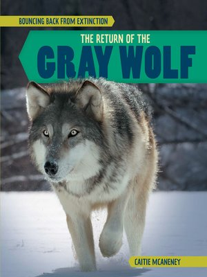 cover image of The Return of the Gray Wolf