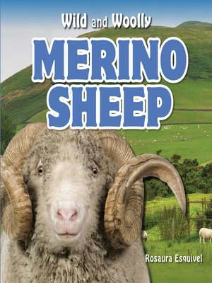 cover image of Merino Sheep