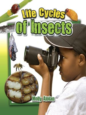 cover image of Life Cycles of Insects