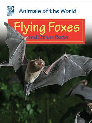 cover image of Flying Foxes and Other Bats
